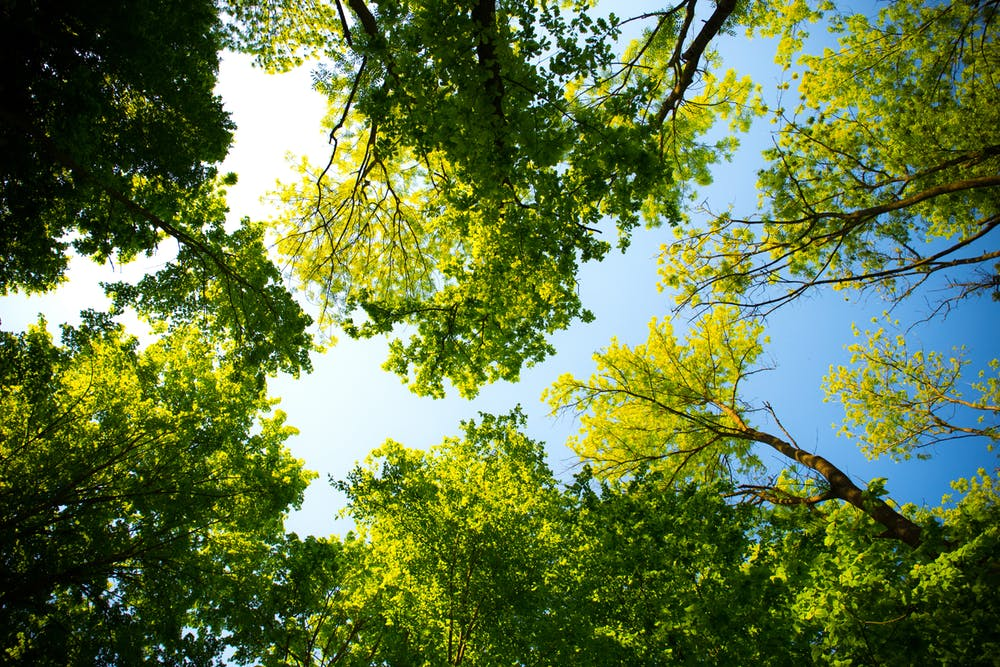 Why You Should Hire An Expert Arborist In Sydney Inner West When You Want Your Trees Removed Quickly And Safely